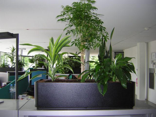Séparateur bureau contenant végétal