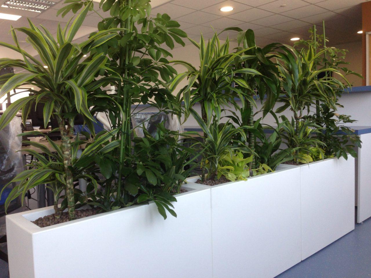 Séparateur végétal open space
