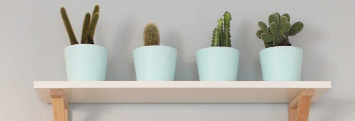 https://www.vert-morisson.fr/wp-content/uploads/2021/10/Rangee-de-cactus-source-pinterest2-e1633958621977.jpg
